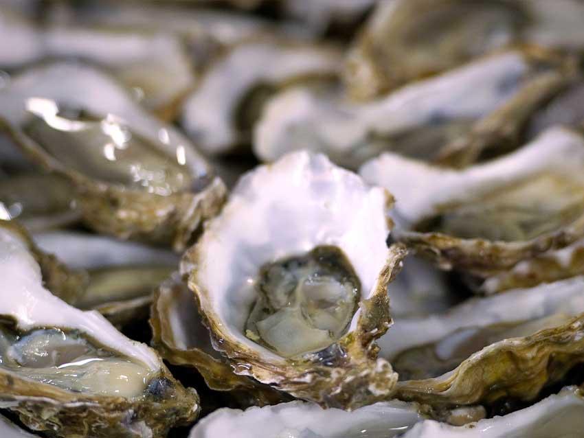Margain Marée - Crustacés-Coquillages
