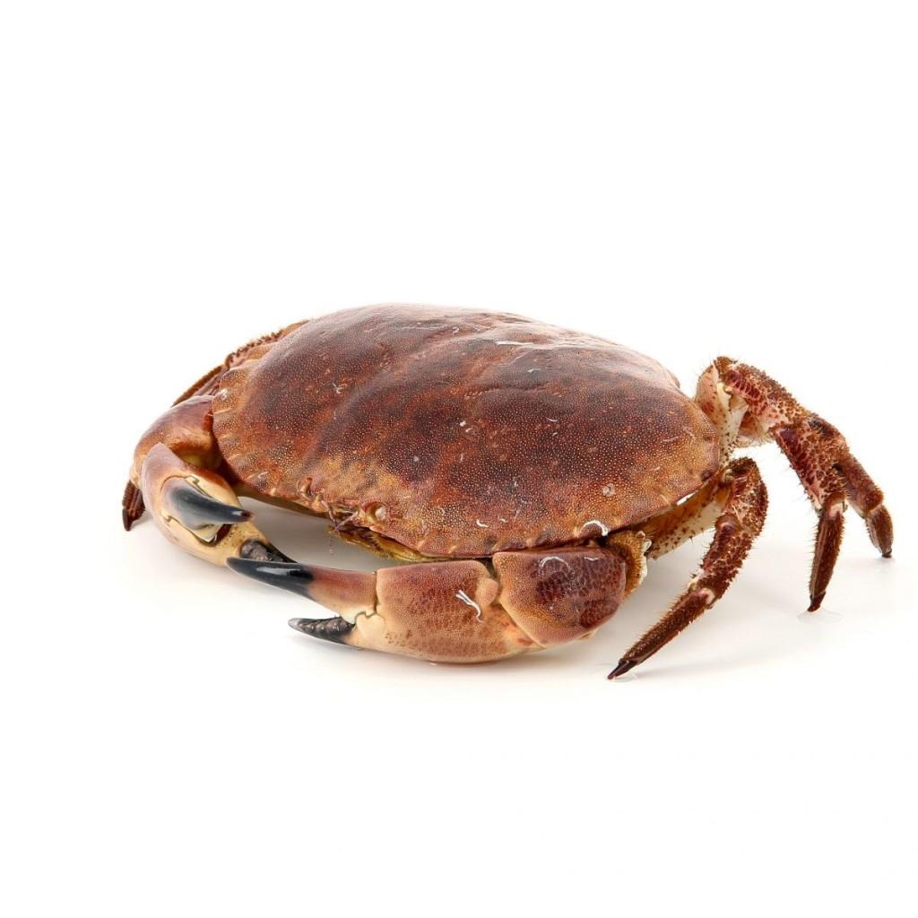 MARGAIN Marée Crabe