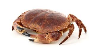 crabe_Margain
